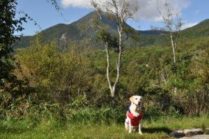 近くのお散歩コースで蓼科山と記念撮影