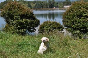 蓼科湖でお散歩