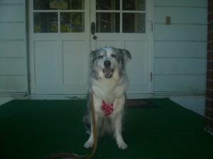 我が家の愛犬ミリちゃん