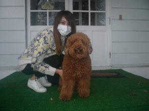 我が家の愛犬ヴォレローくん