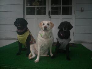 我が家の愛犬ニコとアイリー